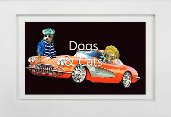 Dogs and Cats Photographs and Art for sale