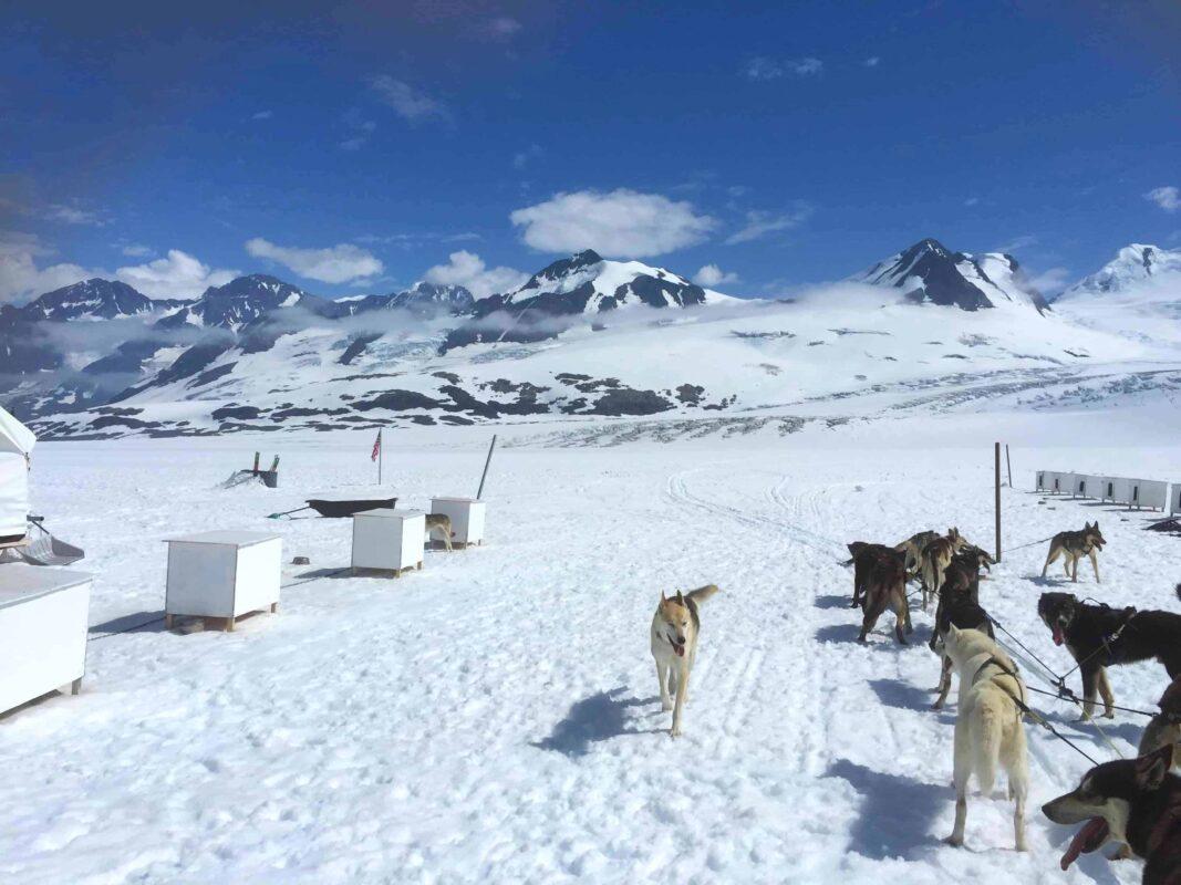2. Best Alaska Dog Sledding Tours