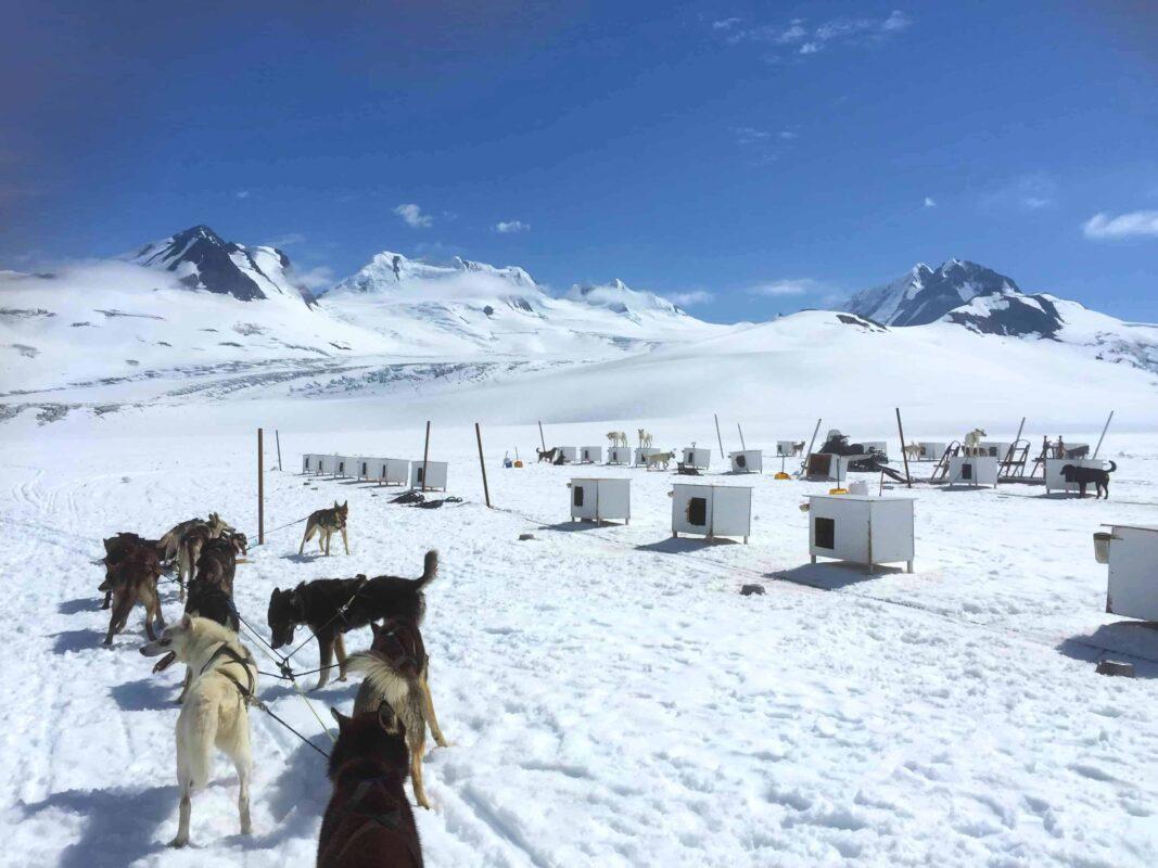 3. Best Alaska Dog Sledding Tours