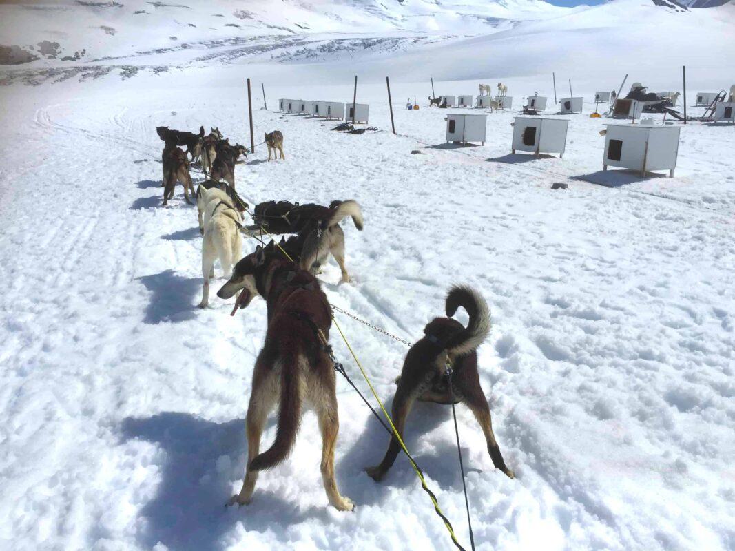 5. Best Alaska Dog Sledding Tours