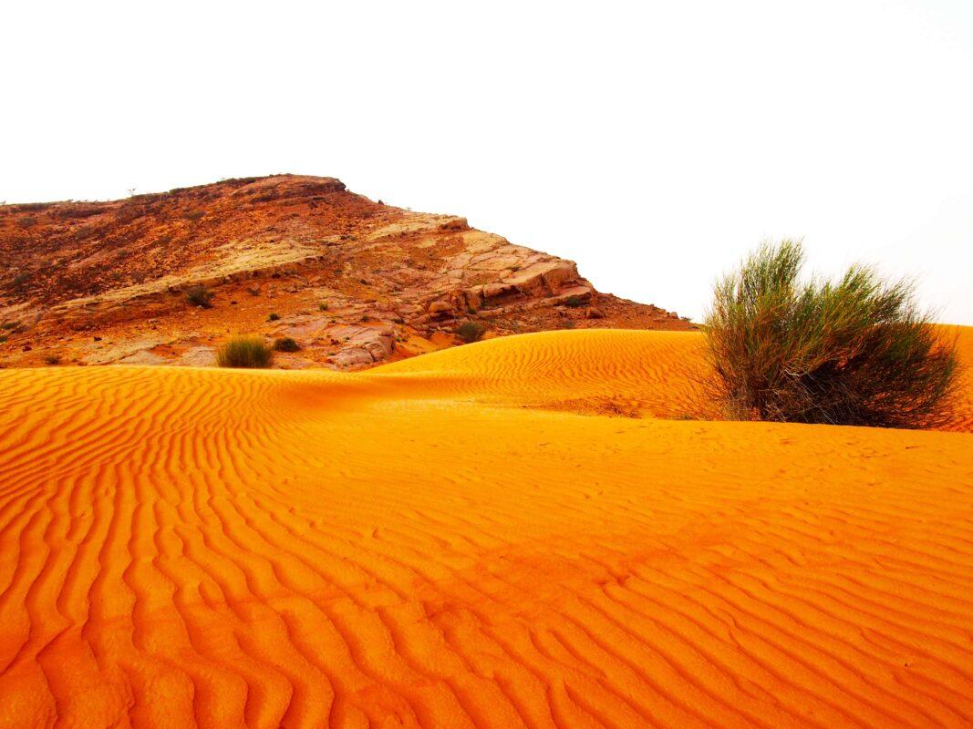 Arabian Adventures with Desert Safari in Dubai 10