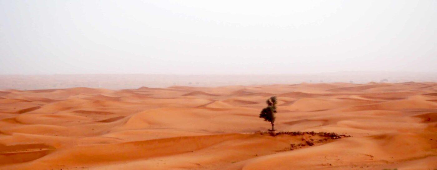 Arabian Adventures with Desert Safari in Dubai 11