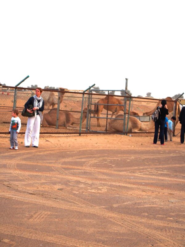 Arabian Adventures with Desert Safari in Dubai 15