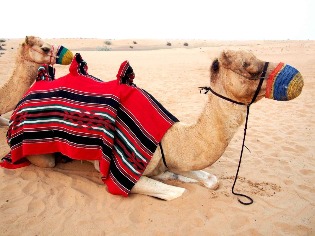 Arabian Adventures with Desert Safari in Dubai 30