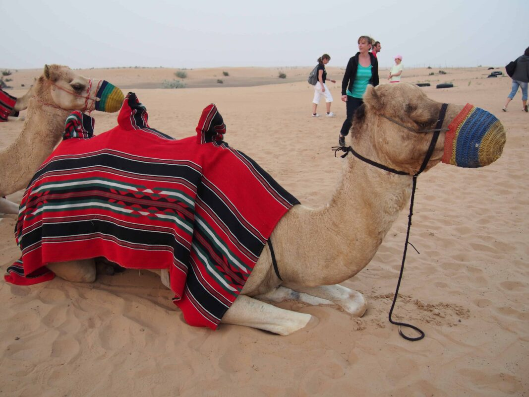 Arabian Adventures with Desert Safari in Dubai 31