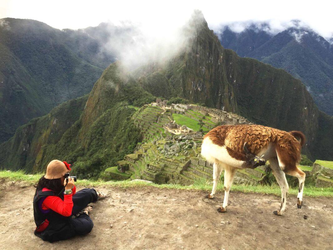 DR ZENAIDY CASTRO and The Llamas of Machu Picchu 22