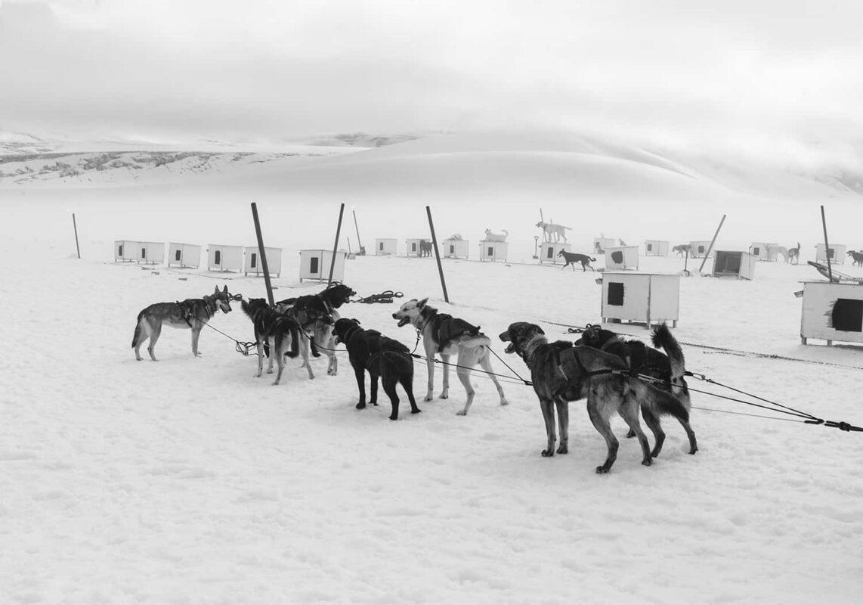 Glacier Dog sled Alaska Black and White Photography