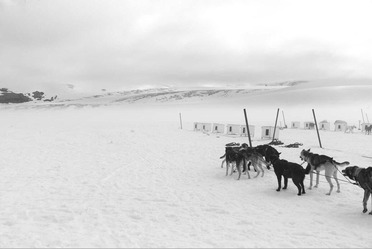 Glacier Dog sled Alaska Black and White Photography 11