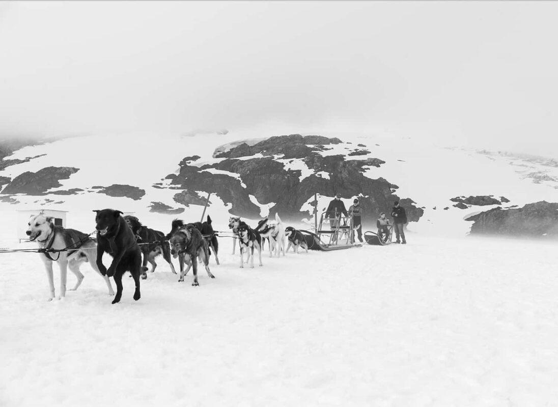 Glacier Dog sled Alaska Black and White Photography 13