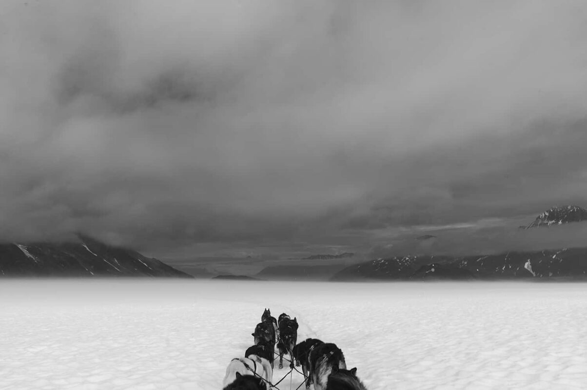 Glacier Dog sled Alaska Black and White Photography 14