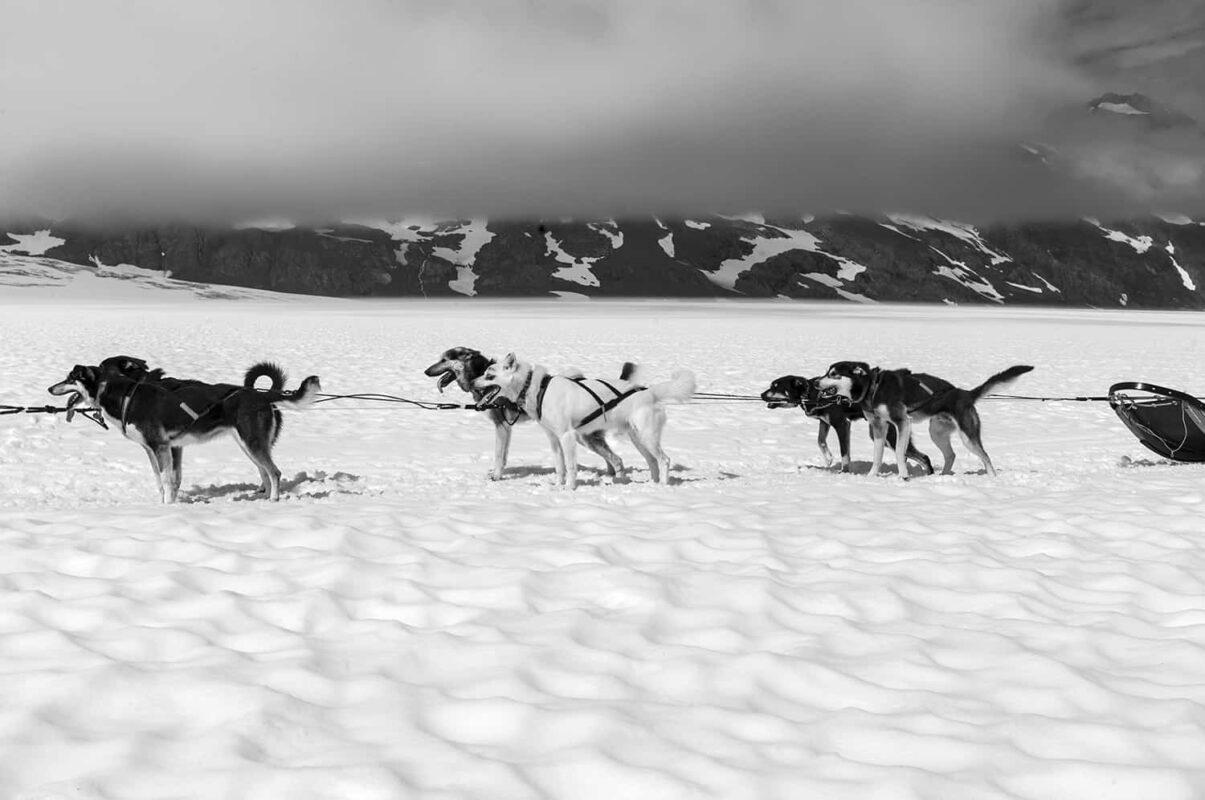Glacier Dog sled Alaska Black and White Photography 18