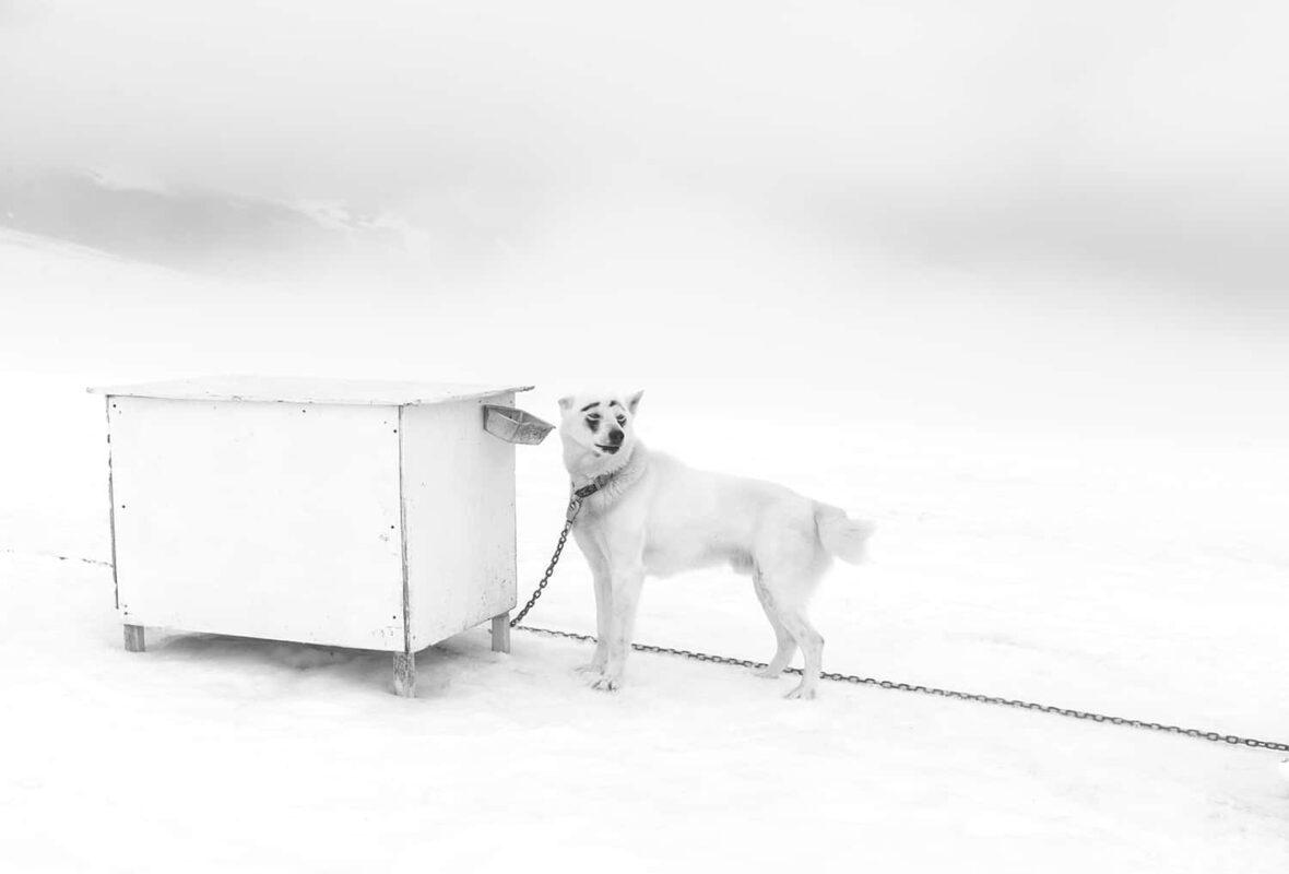 Glacier Dog sled Alaska Black and White Photography 8