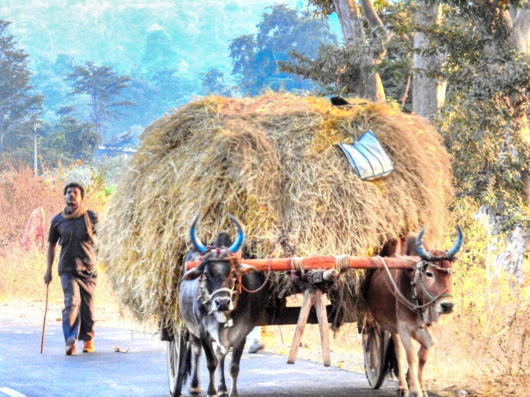 Gond Tribe of Central India famous street photographer Dr Zenaidy Castro 22