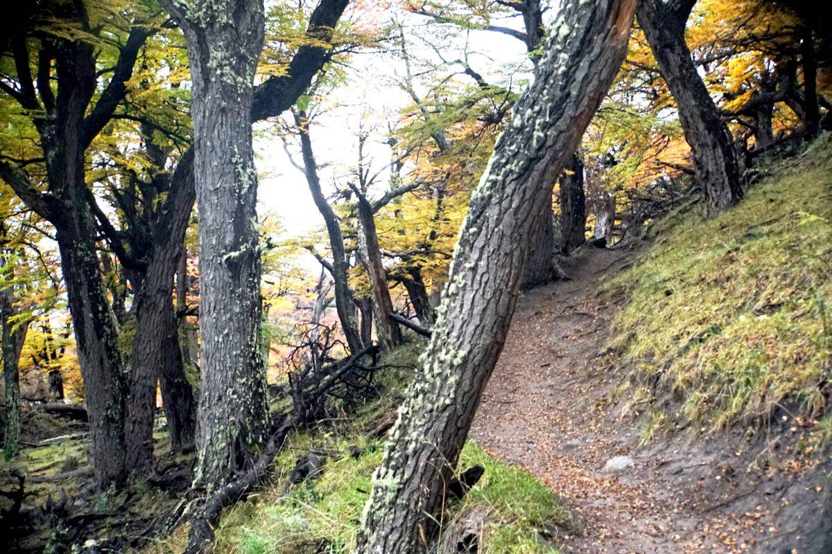 Hiking in El Chalten Mount Fitz Roy Patagonia 11