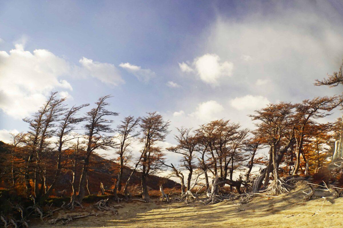 Hiking in El Chalten Mount Fitz Roy Patagonia 14