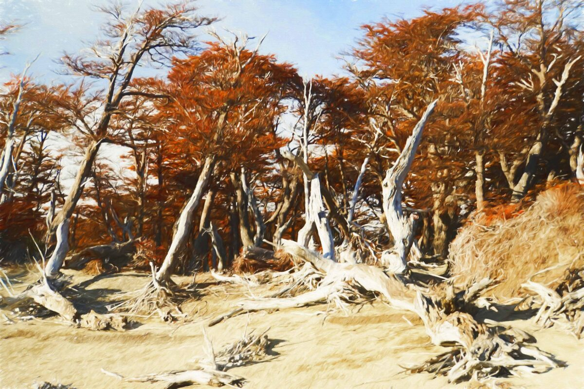 Hiking in El Chalten Mount Fitz Roy Patagonia 15