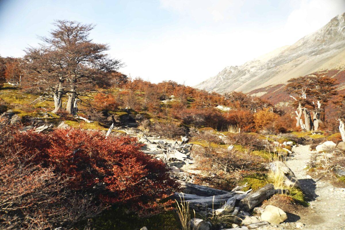 Hiking in El Chalten Mount Fitz Roy Patagonia 16