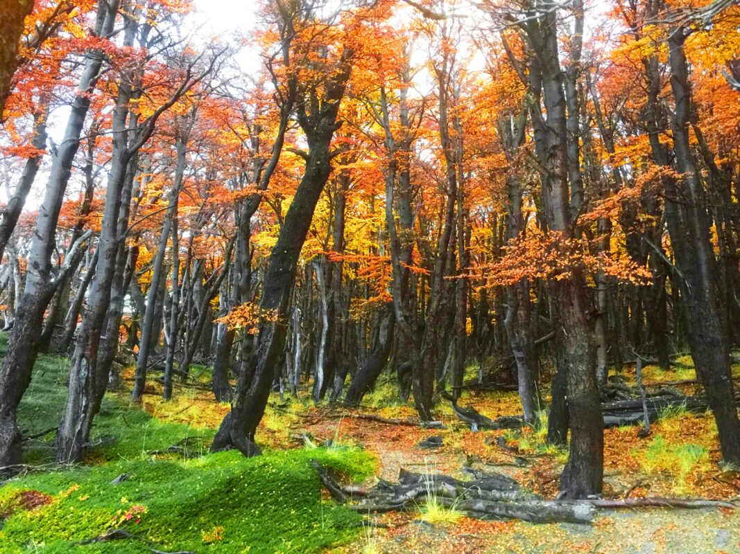 Hiking in El Chalten Mount Fitz Roy Patagonia 20