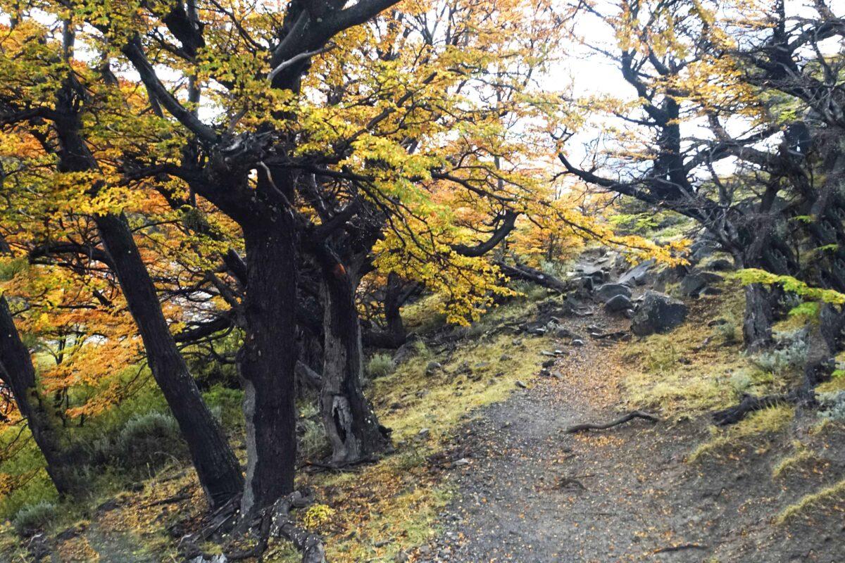Hiking in El Chalten Mount Fitz Roy Patagonia 27