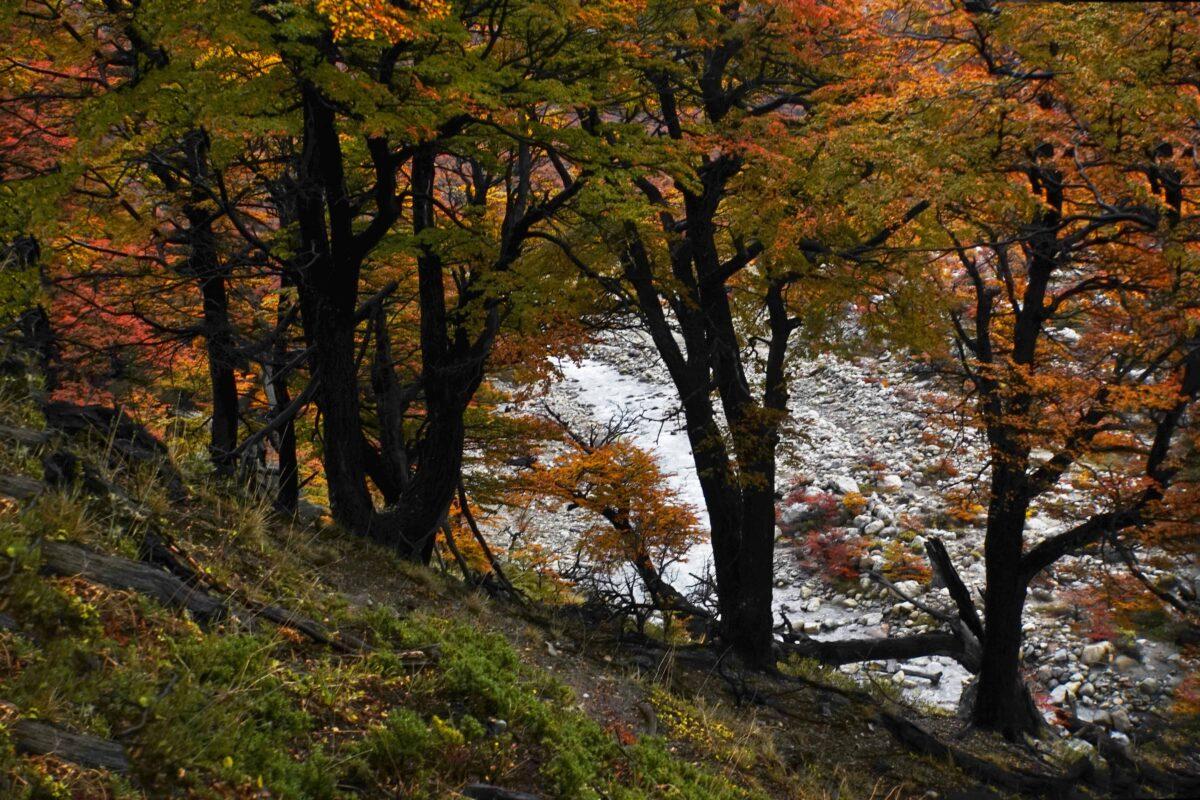 Hiking in El Chalten Mount Fitz Roy Patagonia 28