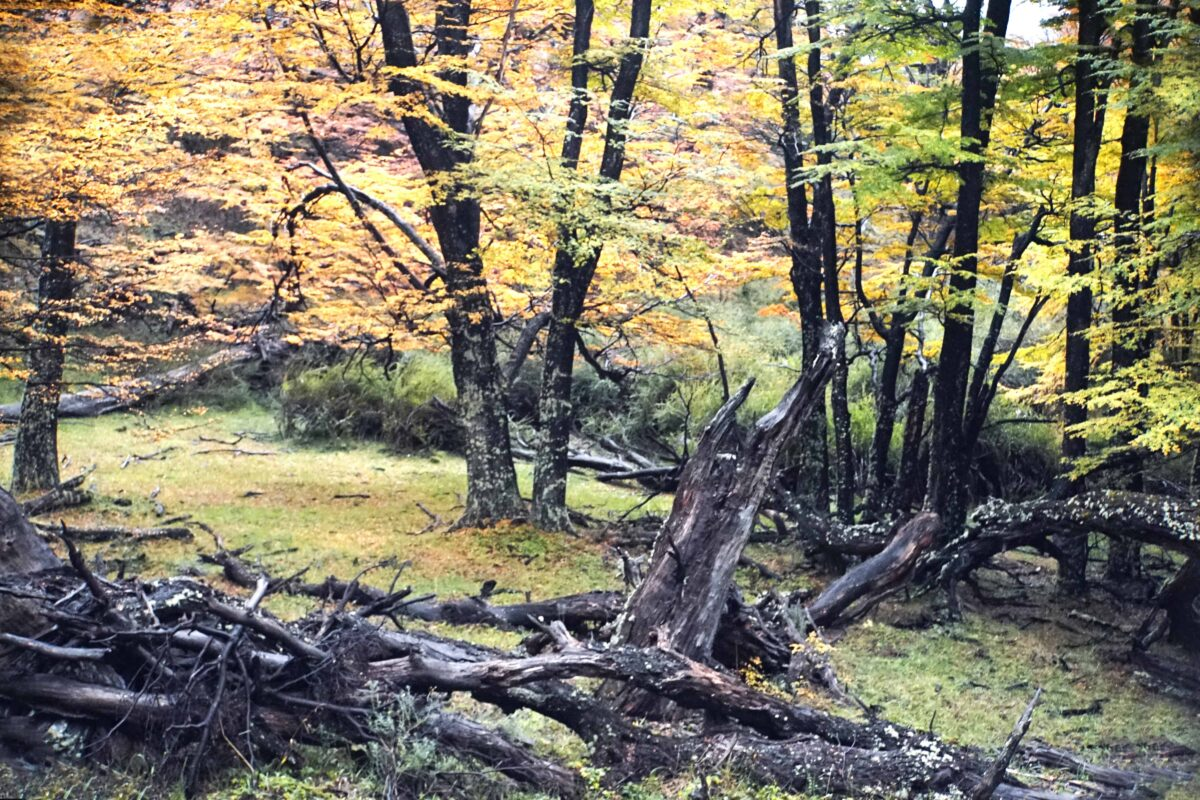 Hiking in El Chalten Mount Fitz Roy Patagonia 30