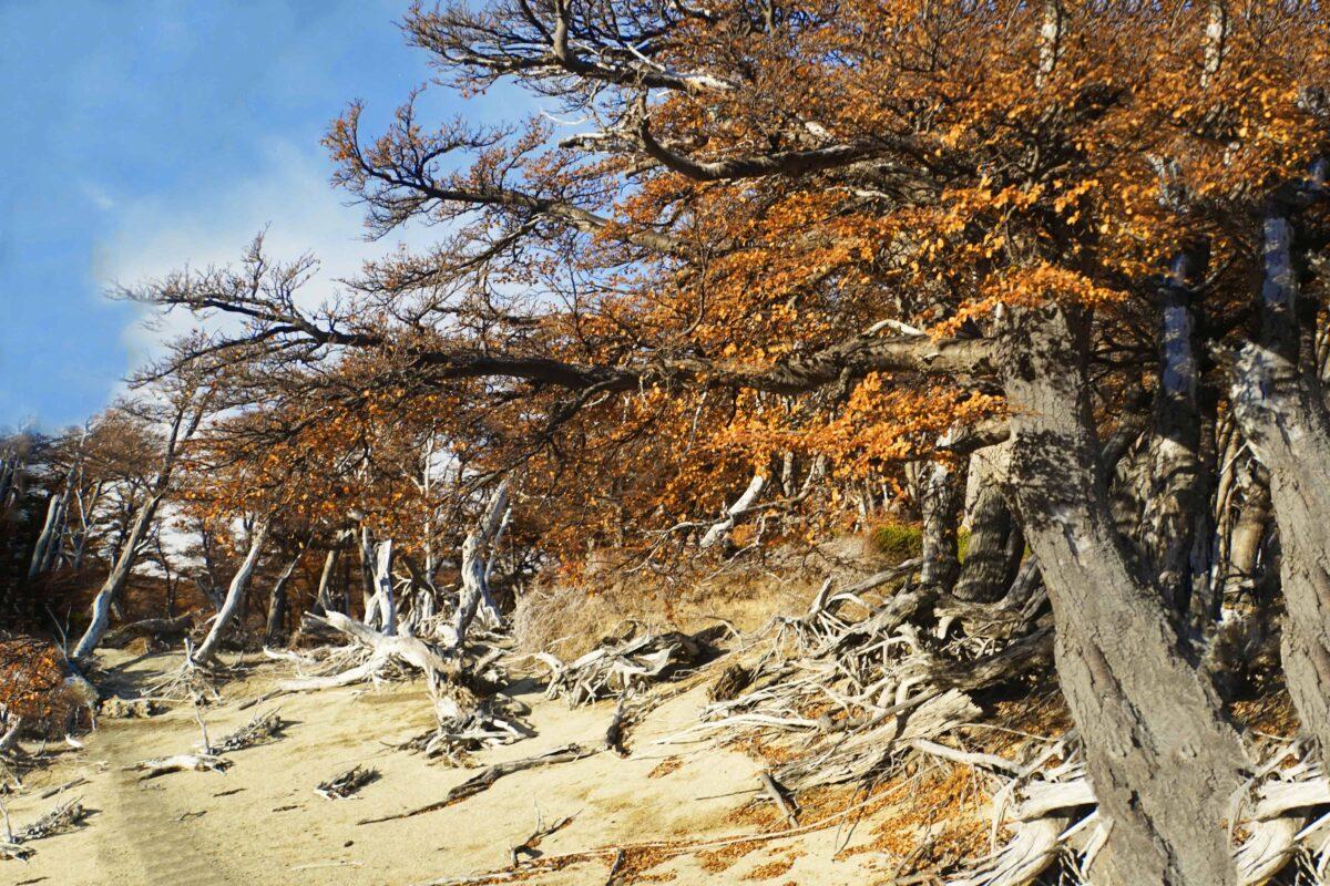 Hiking in El Chalten Mount Fitz Roy Patagonia 33