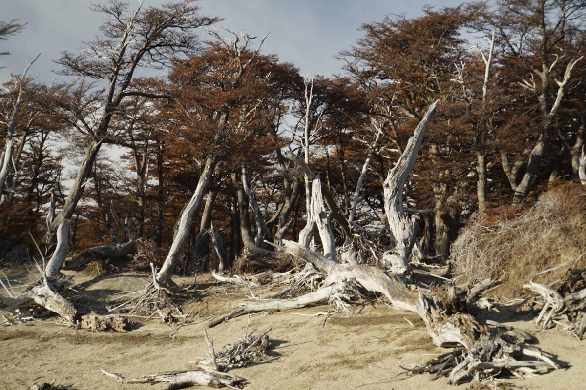 Hiking in El Chalten Mount Fitz Roy Patagonia 34