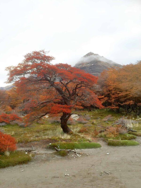 Hiking in El Chalten Mount Fitz Roy Patagonia 37