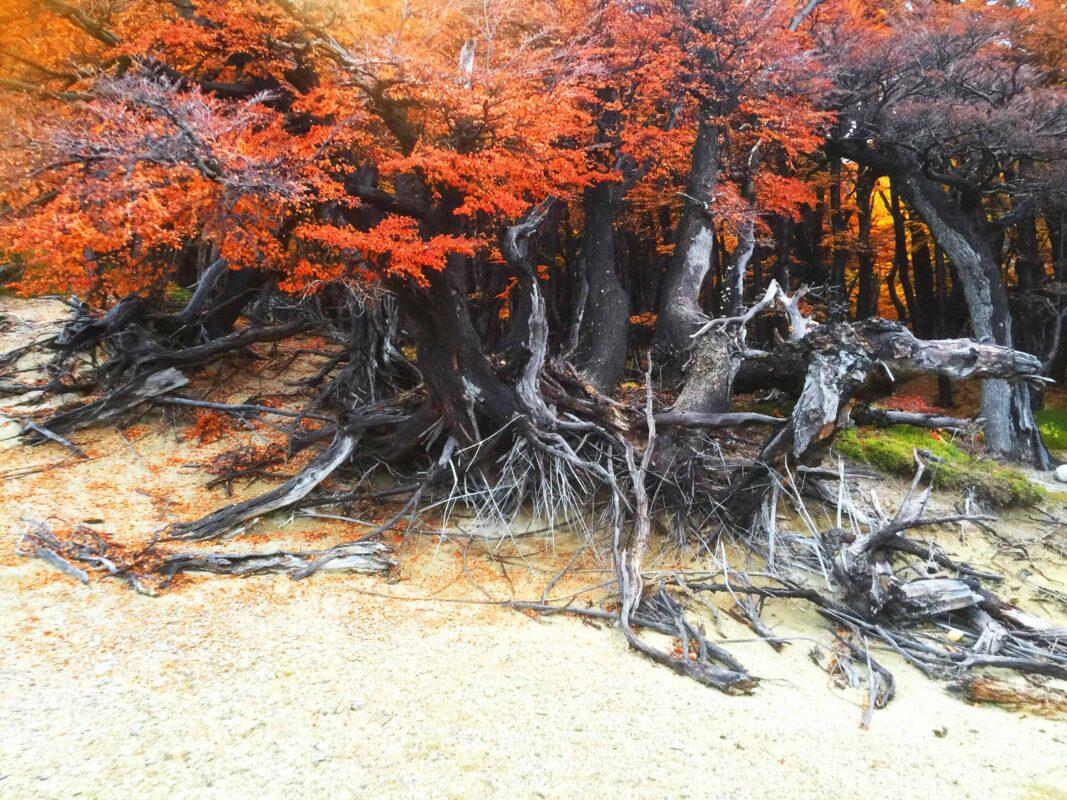 Hiking in El Chalten Mount Fitz Roy Patagonia 38