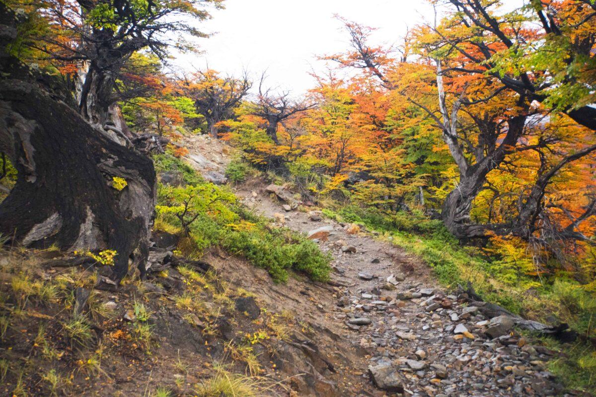 Hiking in El Chalten Mount Fitz Roy Patagonia 8