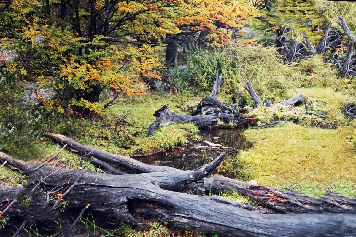 Hiking in El Chalten Mount Fitz Roy Patagonia 9