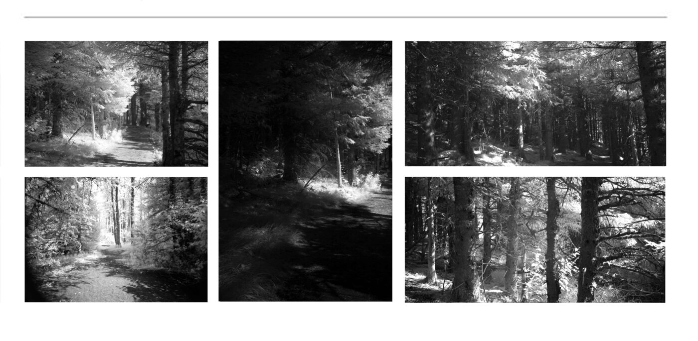 CURATED FINE ART COLLECTIONS | Black & White Photographs for sale