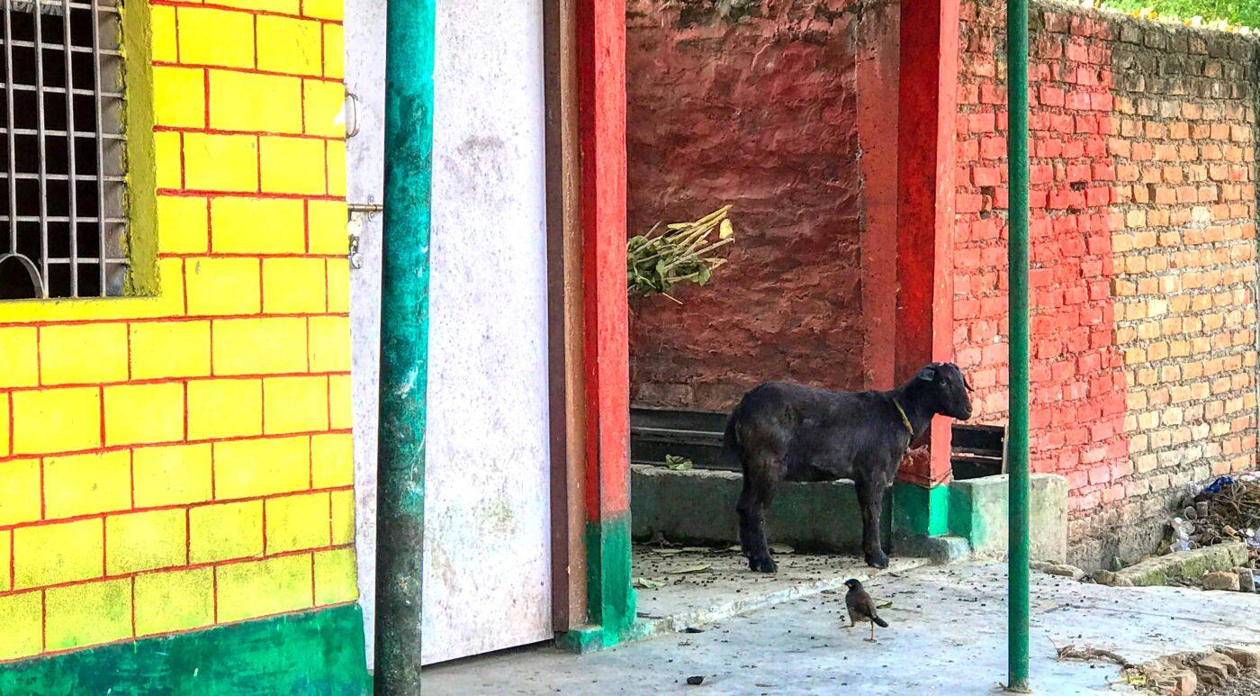 India Street Photography FAMOUS street photographer Dr Zenaidy Castro 20 1