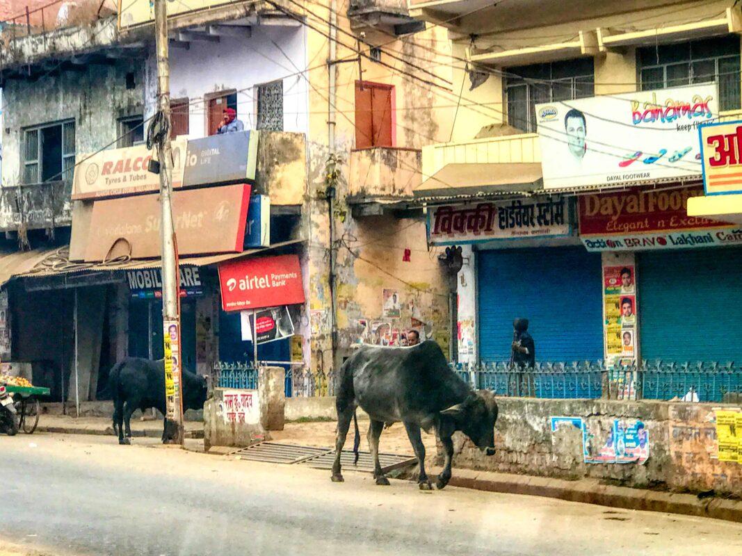 India Street Photography FAMOUS street photographer Dr Zenaidy Castro 30 2