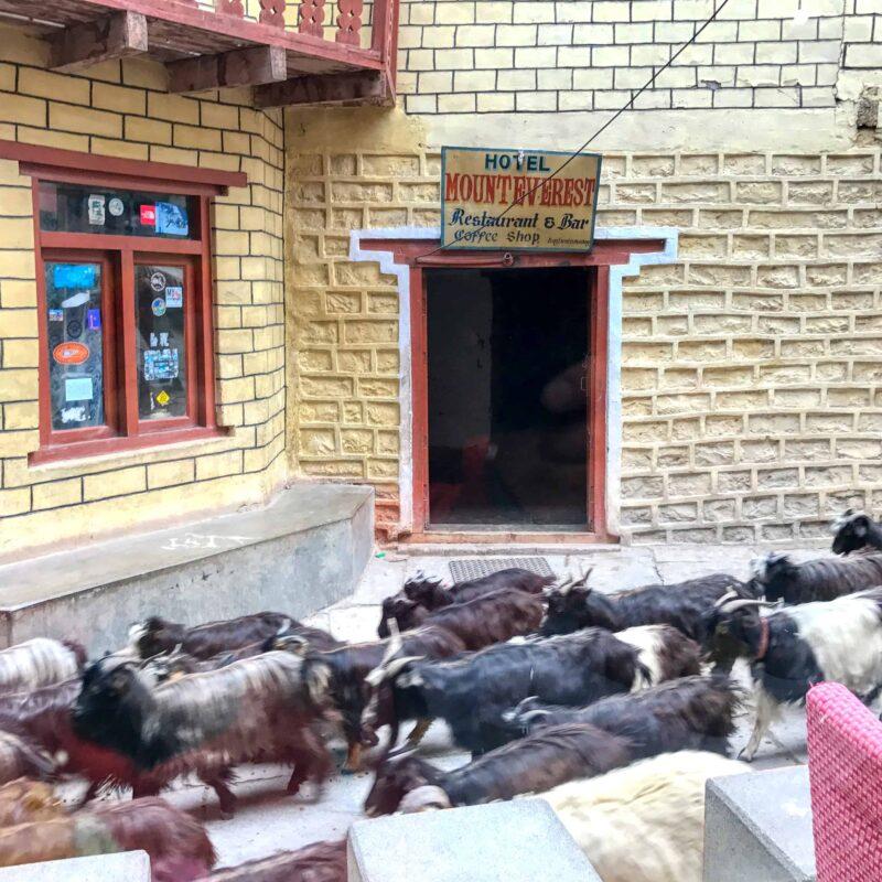 Lower Mustang Nepal travel 54