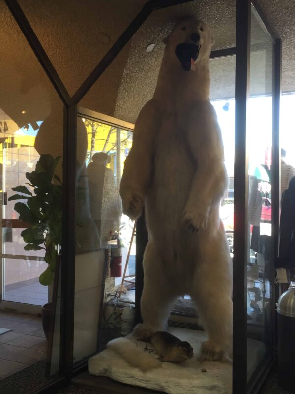 Polar Bear Photography Polar Bear in Zoo captivity 7