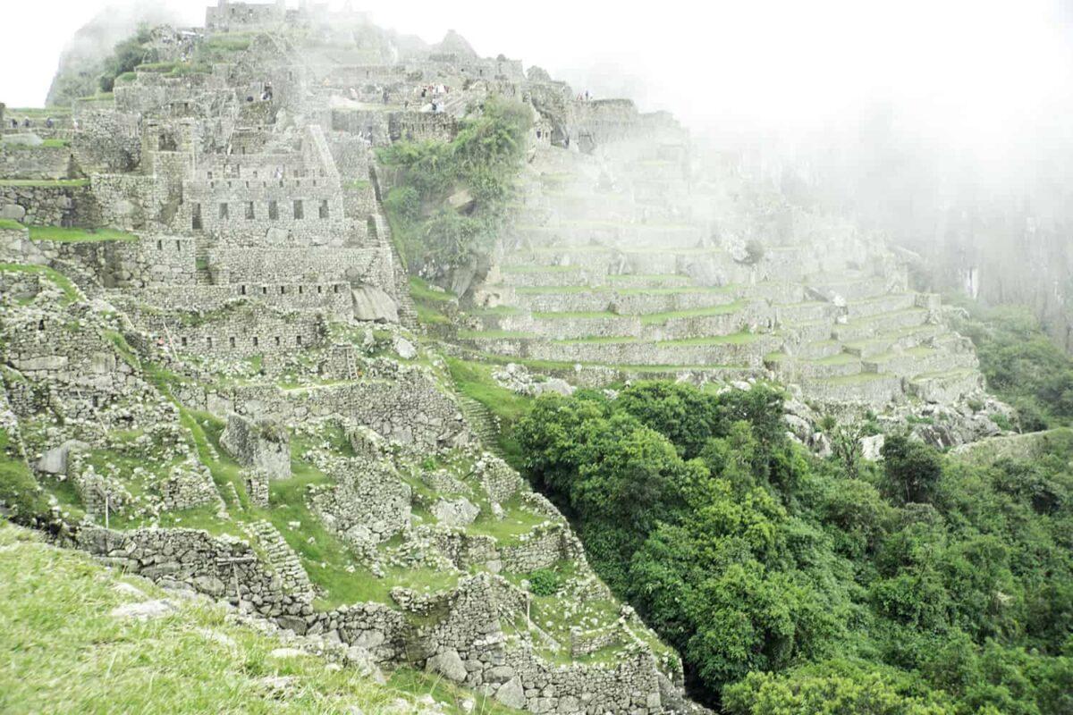 The Llamas of Machu Picchu 11